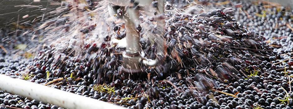 la vinificazione delle uve